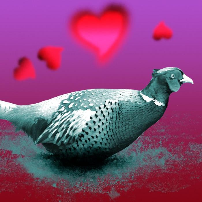 pheasant valentine logo web